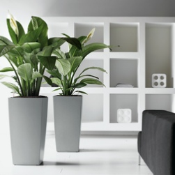 office-plants-cubico-silver-peace-lily