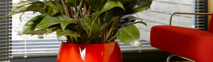 Office Plants Interior Landscaping